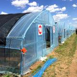 Het nieuwste Landbouw Plastic Groene Huis van de Film van de Tunnel voor Verkoop