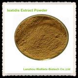 Polvo natural del extracto de Isatidis de la raíz de la alta calidad