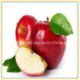 425g délicieux en gros Apple en boîte par sirop léger