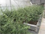 Полиэтилен прокола корня упорный & мембрана полипропилена водоустойчивая