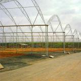 Парник цены по прейскуранту завода-изготовителя напольный/Hydroponic растет шатер