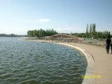 Plastikgarten-PfadWPC Decking