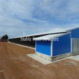 Casas de pollo de la estructura de acero de la luz de la buena calidad