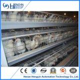 4 Reihe-Ei-Schicht-Huhn-Bauernhof-Rahmen