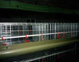 H-Type camp de couche de grilleur avec le système automatique