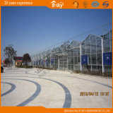 Venlo Type Multi-Span Glass Greenhouse per Planting Vegetables&Fruits