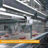 Tipo gabbia automatica galvanizzata di H del pollo del bambino del TUFFO caldo per l'innalzamento della pollastra