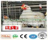 Grilleur de couche/système de cage poulet de viande pour la ferme avicole (un type bâti)