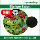 Выдержка Elderberry с сертификатом ISO