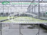 Glasgewächshaus für Gemüsewasserkultursystem