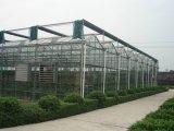 Serre di vetro della multi cavità della portata per Growing di fiore