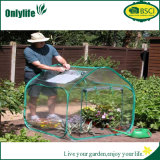 Onlylife 원예식물 Foldable PVC 투명한 온실