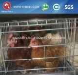 ドバイの鶏の養鶏場装置