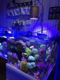 Venta al por mayor Acuario Dimmer de Epistar LED para Coral Reef