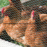 Huhn-Draht-/Vogel-Rahmen-Ineinander greifen/galvanisierte sechseckige Draht-Filetarbeit