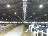Сараи амбара коровы/лошади стальной структуры