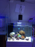 Lumières à télécommande en gros d'aquarium de DEL pour le récif coralien
