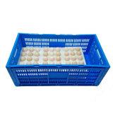 Caixa Foldable do ovo da caixa plástica
