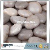 Белая круглая оптовая продажа камня камушка для сада и Landscaping