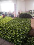 2017 ULTRAVIOLETA artificiales de la pared de las plantas del nuevo diseño protegida