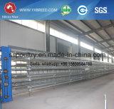 Fabriek van de Kooien van de Kip van de Laag van het Landbouwbedrijf van het gevogelte de Apparatuur Gegalvaniseerde