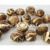 Traditioneller Chinese-Nahrung getrockneter Teegestreifter Shiitake-Pilz