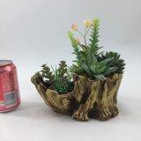 Plantas Succulent artificiais da decoração do projeto novo