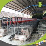 Système alimentant de disque de chaîne de matériel de ferme de porc pour le porc de finissage