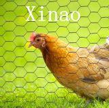 Het gegalvaniseerde Hexagonale Opleveren van de Draad voor Het Schermen van /Rabbit van het Kippegaas (xa-HM420)
