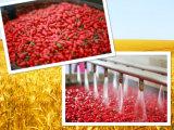 Colore rosso natale cinese Goji dell'alimento di perdita di peso di salute