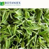 Antioxydant-Tee-Polyphenol-grüner Tee-Auszug