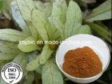 Estratto /Astilbin 15%, 98% di Astilbin del foglio di Engelhardtia Roxburghiana di alta qualità da HPLC, protezione del fegato
