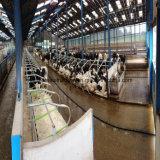 Helle Fertigstahlrahmen-Kuh-Pferden-Ställe für Verkauf