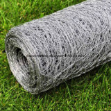 Hexagonal Wire Netting/Live Inventories Wire Netting with Competitive Price