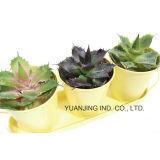De de mini Potten/Emmers van de Bloem met Succulents voor de Decoratie van het Huis/van de Tuin