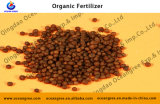 Alta qualidade e Lower Price Plant e Agriculture Using Organic Fertilizer
