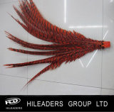 Tail inferior Pheasant Feather para Dyed Lady Amherst Feather (RT022)