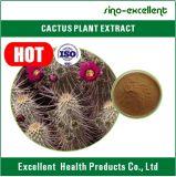 Extrait de cactus de Hoodia Gordonii