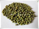 Фасоли Mung изготовления естественные/порошок выдержки 10:1 Radiata Vigna