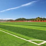 A grama da alta qualidade para o futebol ostenta o relvado artificial