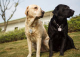 Nueva etiqueta de perro de encargo promocional del metal del diseño moderno