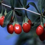 セイヨウカリンLbp Barbary Wolfberryのフルーツの有機性Gojiの果実