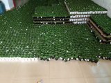 Piante e fiori artificiali di mini pianta Gu-SD0264 succulente