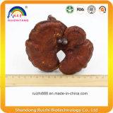 15cm высушенное Ganoderma Reishi Lucidum с рангом