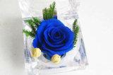 Rose acrylique claire en gros fleurit des boîtes de présentation