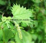 Radice Extract/&beta dell'ortica; - Sitosterolo per gli alimenti ed il supplemento