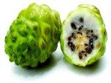 Polvere del succo di frutta di Noni per sapore dell'alimento e della bevanda