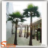 중국 공급자 섬유유리 트렁크를 가진 인공적인 부채꼴 야자수 나무