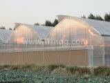 Landwirtschaftliches Gewächshaus EU des vorbildlichen Multiüberspannung Filmes