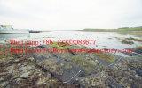 Auster Wachsen-oben Beutel, Austeren-Ineinander greifen-Beutel, Aquakultur-Netz